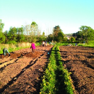 Acadia Page - Community Farm